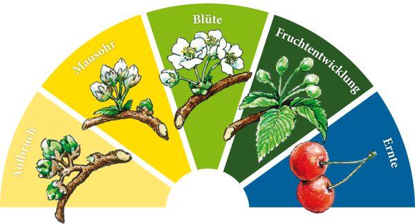 Blütenbarometer Fränkische Schweiz